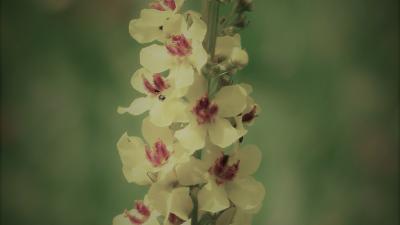 l_flowers-167432_1920-1