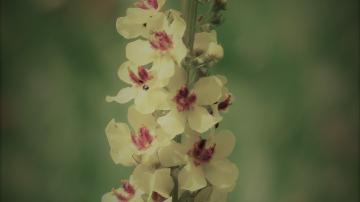 flowers-167432_1920-1